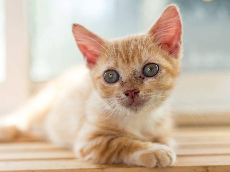 Behandlung von giardien bei katzen