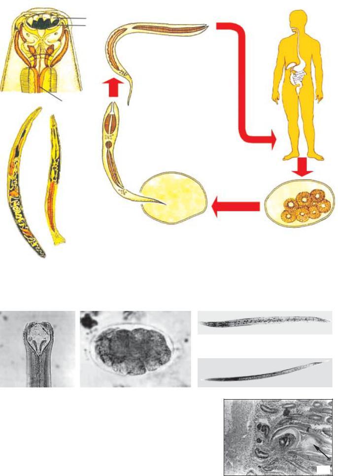 enterobiosis parazitológiai vizsgálat a paraziták megelőzése gyermekeknél és felnőtteknél