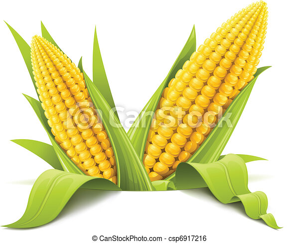 Kukoricacső súlya