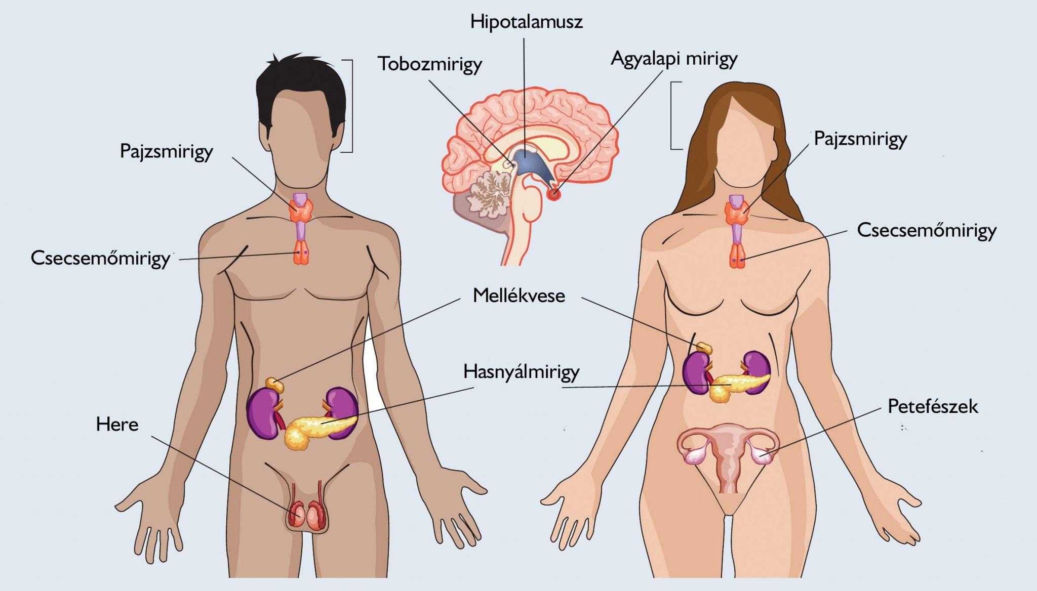 a genitális papilloma tünetei nőknél jardini naxos la taormina