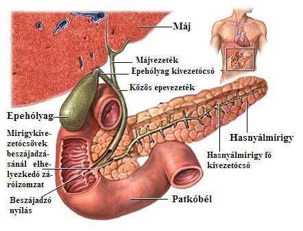 A helminthiasis intézkedései