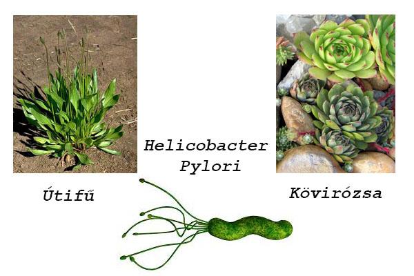 A hamu 25 féle felhasználása- Nem a szemétre való! | Gardening courses, Compost, Bonsai seeds