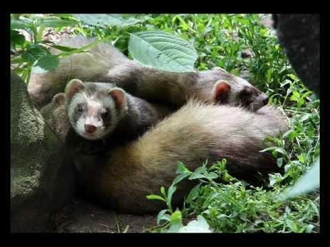 készítmények az emlősök megelőzésére