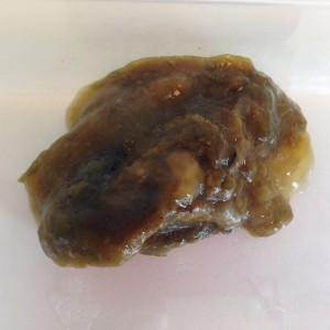 Behandeling giardia mensen - carbocomp.hu - Giardia mensen