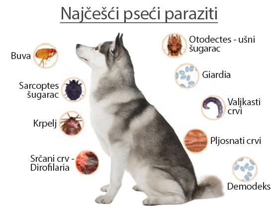 crijevni paraziták kod pasa