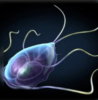 frekvencia készülékek paraziták ellen - carbocomp.hu - Baklayan paraziták