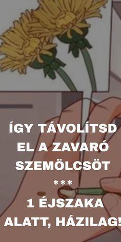 Kalanchoe szemölcsök)