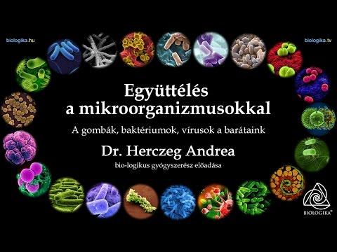 Erős immunrendszerrel a baktériumok és vírusok ellen