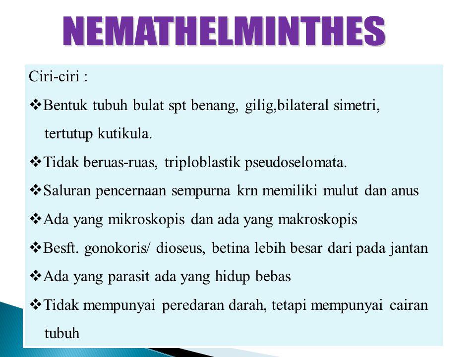 Filum nemathelminthes ppt - carbocomp.hu