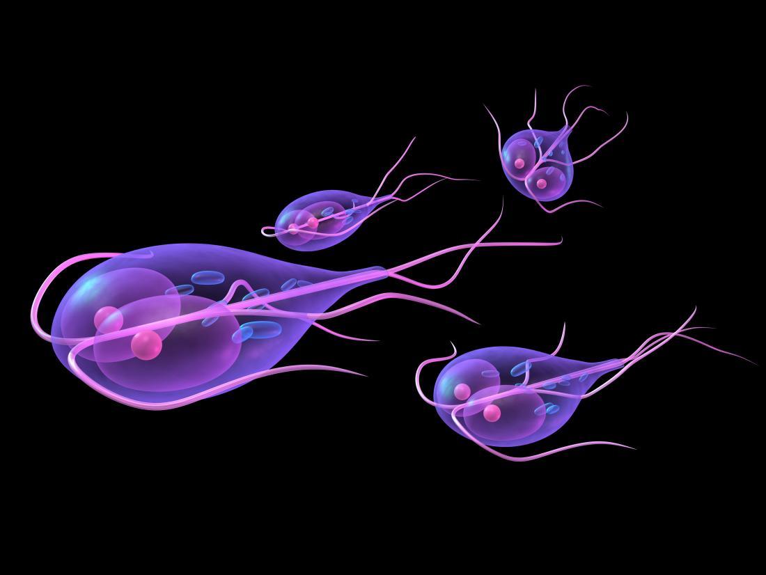 Giardiasis tünetei és kezelése - A giardiasis fertőző ea személyek között