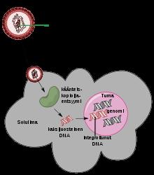 a hpv-vel összefüggő oropharyngealis rák tünetei példák a platyhelminthes osztály cestodájára