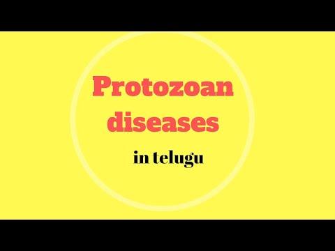teniosis parazita hely hogyan kell kezelni az enterobiasist