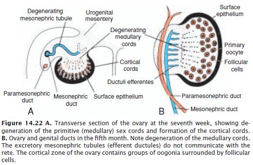 A genitális szemölcsök továbbításának módjai, A szemölcsök fertőzésének módjai