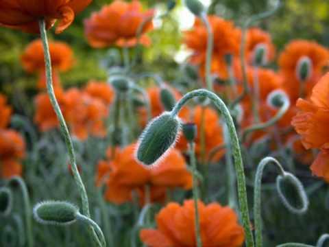 férgek és virágok