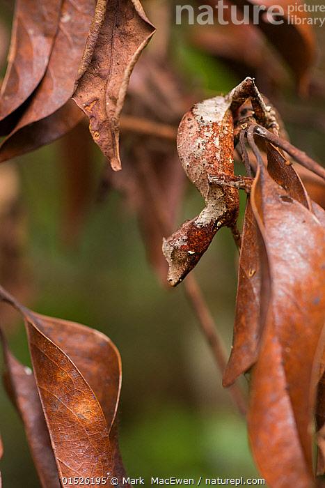 távolítsa el a parazitákat a pirula beléből hpv nemi szerv okai