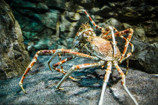 Királyrák és japán óriás tengeri pók grillen