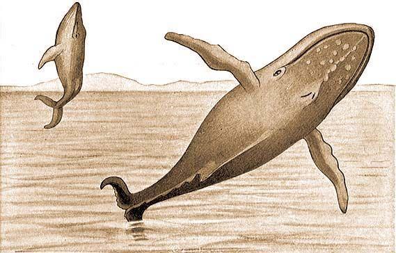 Milyen paraziták élnek a bálnában