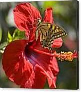 Ferezol a papillómákból és a szemölcsökből - az ár és a drogfogyasztásról - Bőrgyulladás
