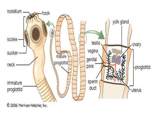 a helminthiasis megelőzése