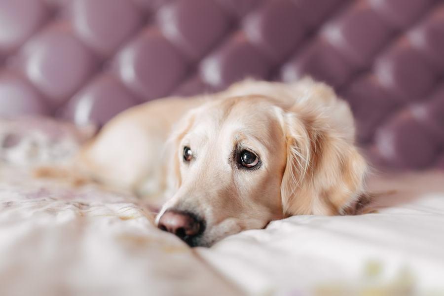 rák szarkóma kutyáknál