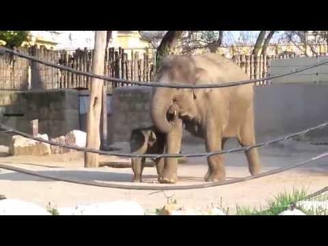 Különleges dolog derült ki az elefántokról | NOOL