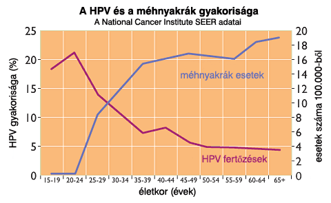 hpv rák gyakorisága