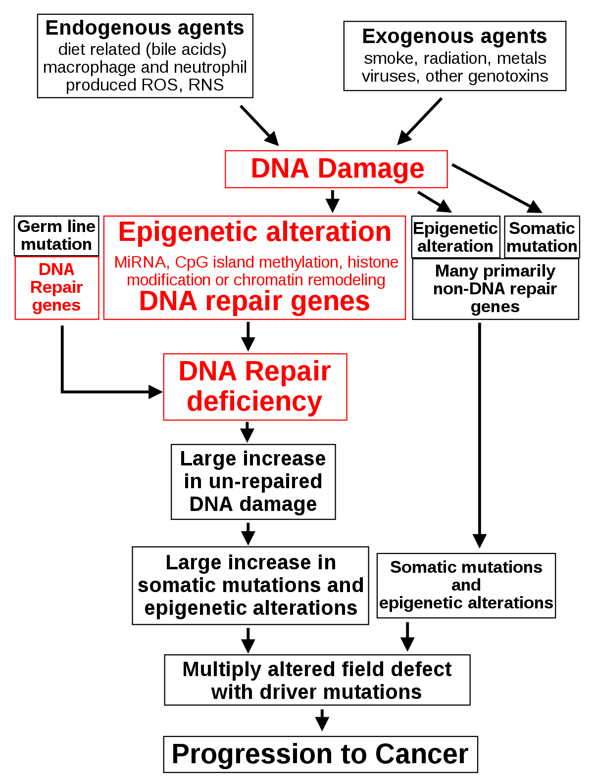 Diphildobothriasis invazív stádiuma, A féregkezelés tünetei