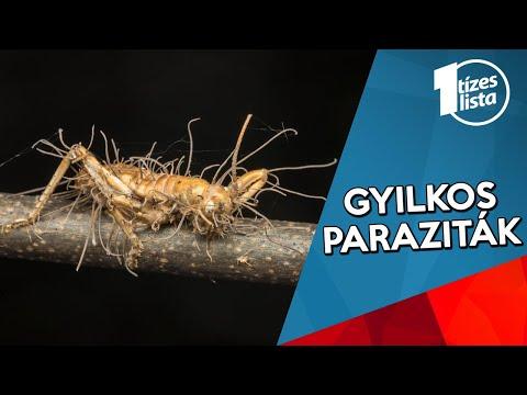 paraziták fürdő pinworms kezelés tisztítása