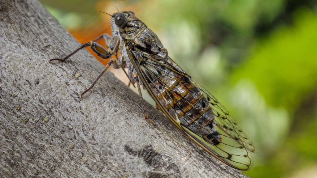 Rovarok és pókok trippanosomatid parazitái - Hasonló könyvek címkék alapján