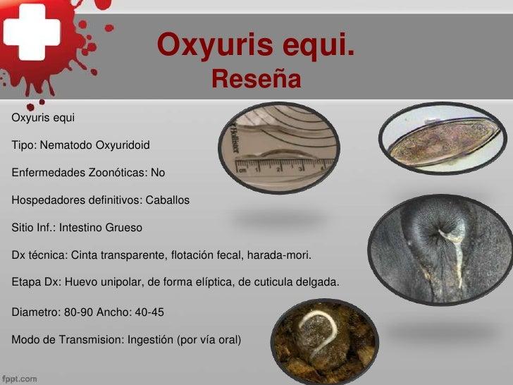 oxyuris equis az emberi papillomavírust kezelik vagy sem