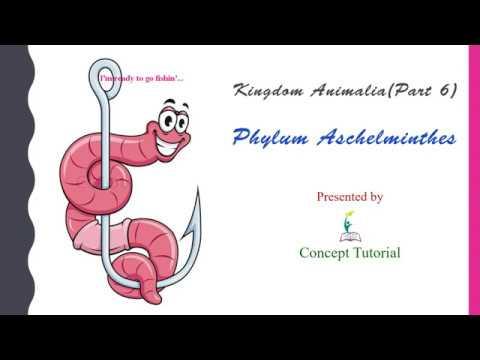 Aschelminthes osztályok, Phylum aschelminthes karakterek,