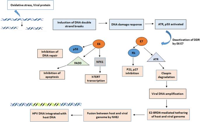 hpv rákos sejtek kezelése