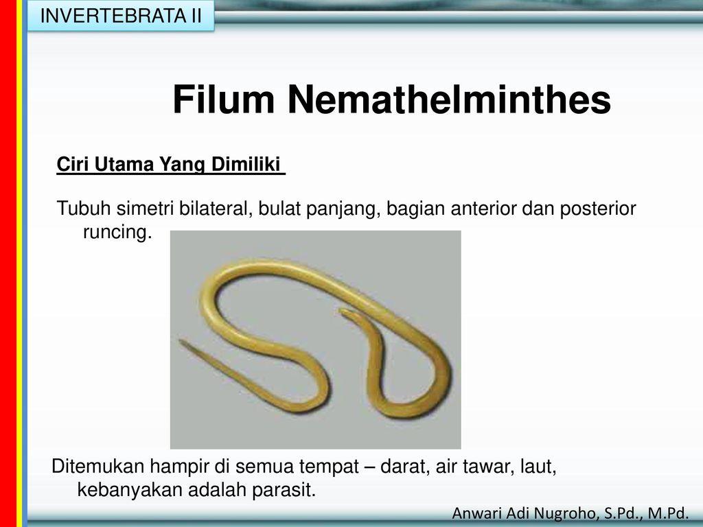 contoh spesies filum nemathelminthes
