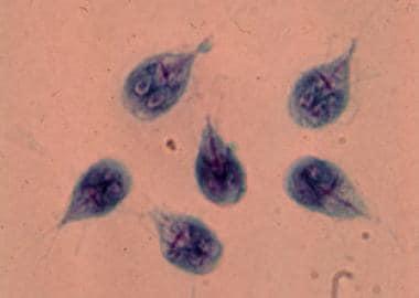 a giardiasis életciklusa féreghajtó gyógyszerek felnőttek megelőzésére