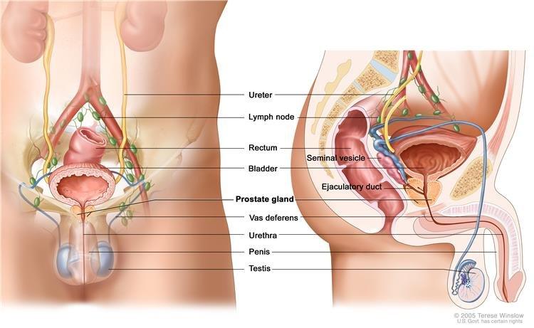húgycső rák prognózisa