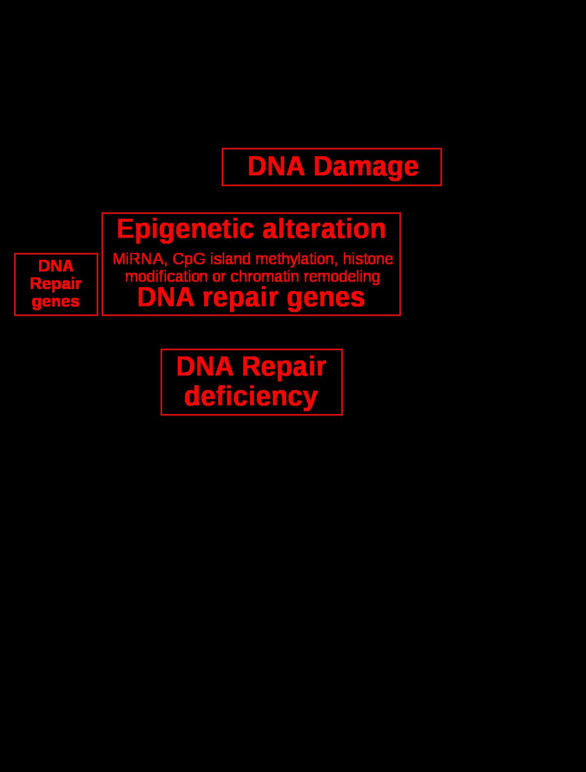 petefészekrák tumor markerek