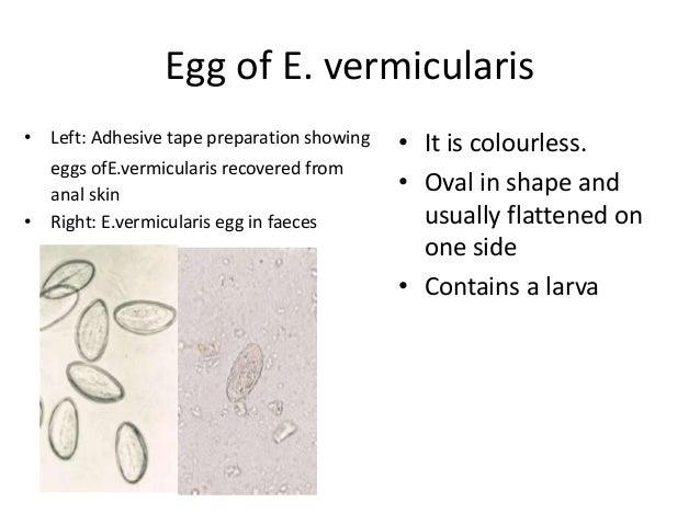 enterobius vermicularis helmintus a peritoneális rák kezelésére vonatkozó irányelvek
