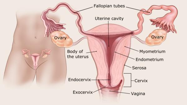 endometrium rák és elhízás