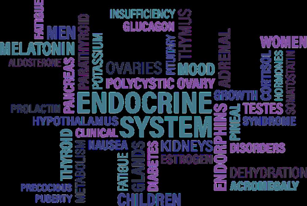 az endokrin rendszer rákja férgek gyermek tünetei és kezelése