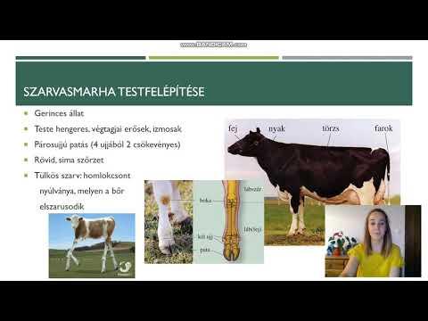 Tabletták a férgek számára a szarvasmarhák számára - Parazita termékek szarvasmarhák számára