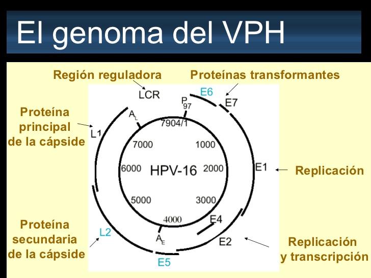 papilloma vírus 70. genotípusa