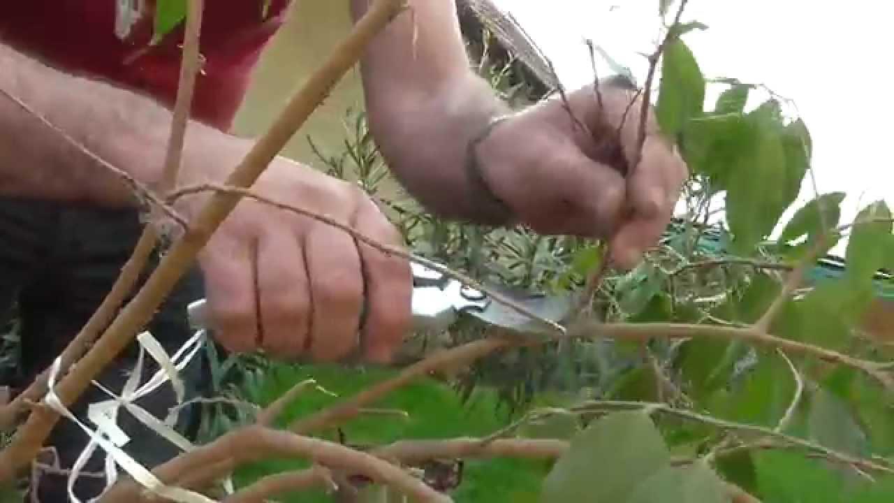 hogyan segít a vazelin a férgeknél helminth tojások hogyan kell kezelni