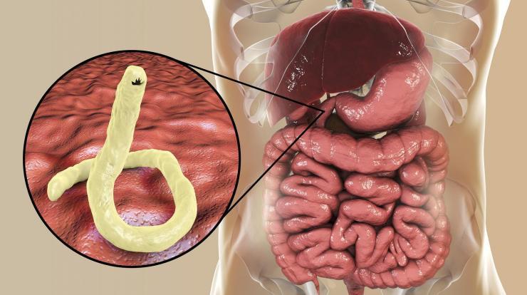 Genetikai paraziták, Az emberi test egy genetikai csatatér