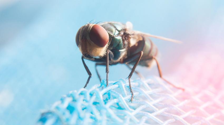 a gerinces cestodákkal rendelkező paraziták kulcsa mint eltávolítani a kis szemölcsöket