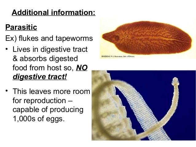 A lábban lévő szalagféreg látható