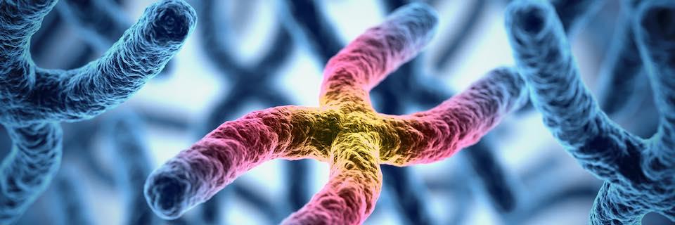 Öröklődés, genetikai vizsgálatok