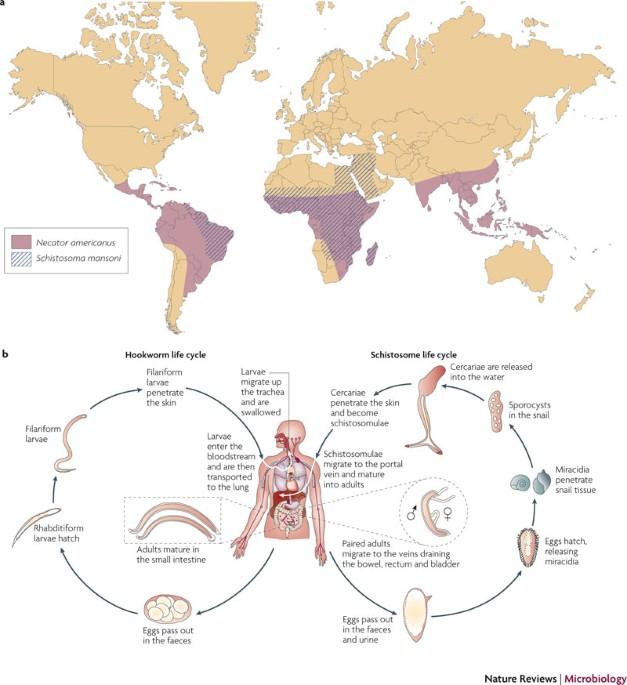 Délkelet-Ázsia: Egészségügyi kockázatok utazáskor