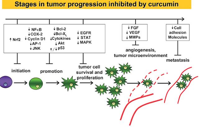 neuroendokrin rák immunterápia