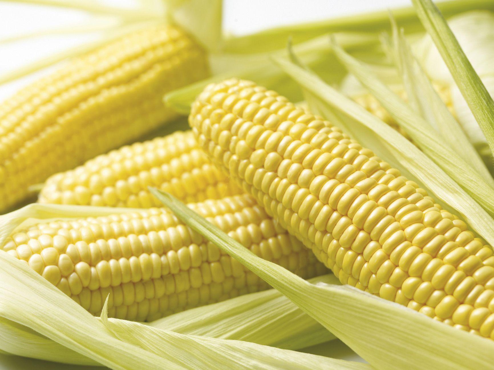 Kukorica (növényfaj)