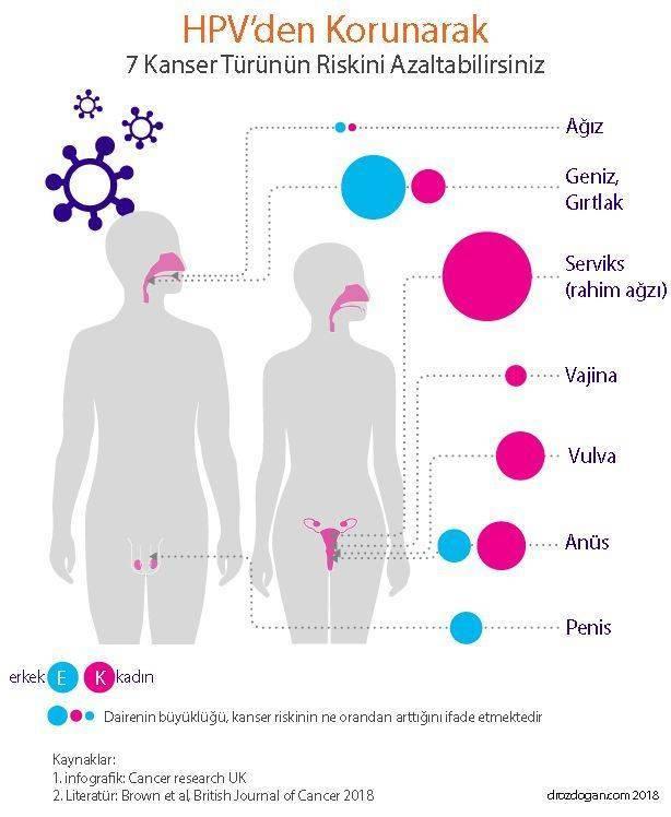 humán papilloma nedir papilloma vírus